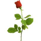 45 -   Single Rose